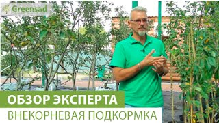 видео Подкормка растений корневая и внекорневая