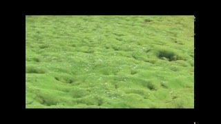 ISLANDE - AUX RIVES DU REEL (Extrait 01)