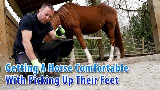 Getting A Horse Comfortable With Picking Up Their Feet