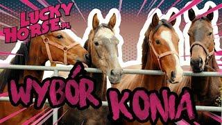 W SIODLARNI - Chcę kupić konia. Jak wybrać i kupić konia?