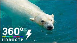 Как белый медведь пытается «оживить» птицу - МТ
