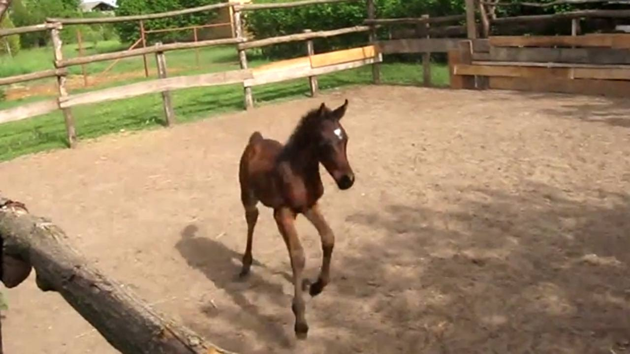 Cute Baby Horses And Ponies Youtube