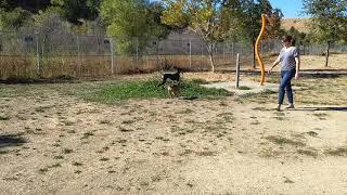 Dog makes friend at dog park