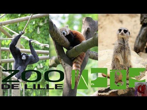 Vivarium du zoo de lille