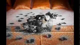El amor desolado - Jorge Falcon - Subtitulado