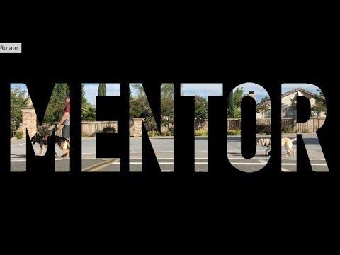 Hero - Guide - Mentor: Klinger mentors a guide dog in training