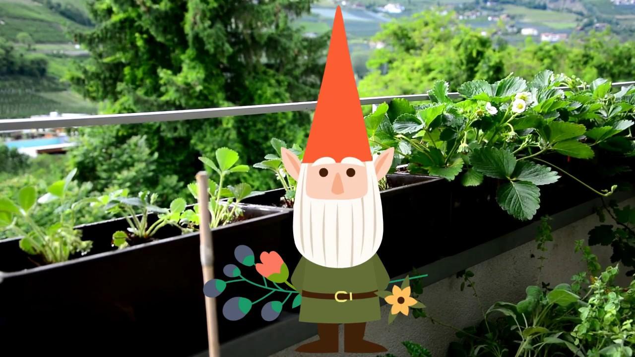Berühmt Erdbeeren auf Balkon pflanzen 🍓 - YouTube #SI_93