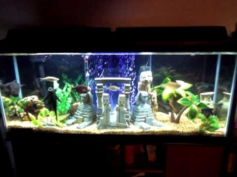 Egyptian theme 55 gallon fish tank in alaska youtube for 55 gallon aquarium decoration ideas