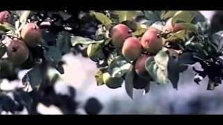 Музыка из кинофильмов 70 х