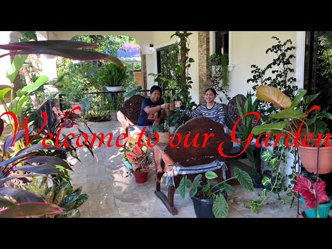 Garden Tour 2021/ My House Plant Collections in the Philippines/ Simple Gardening in the Philippines