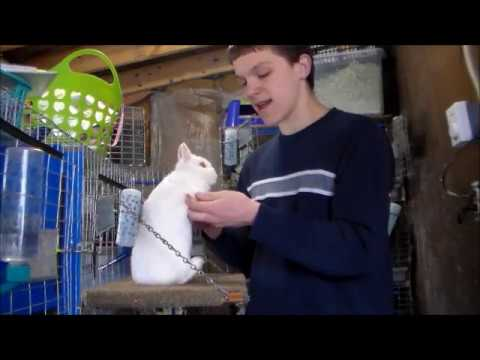 Video 1 Introducing The Varities Of A Netherland Dwarf Rabbit