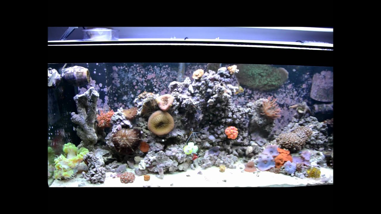saltwater fish tank cost - The Real Cost of a Saltwater