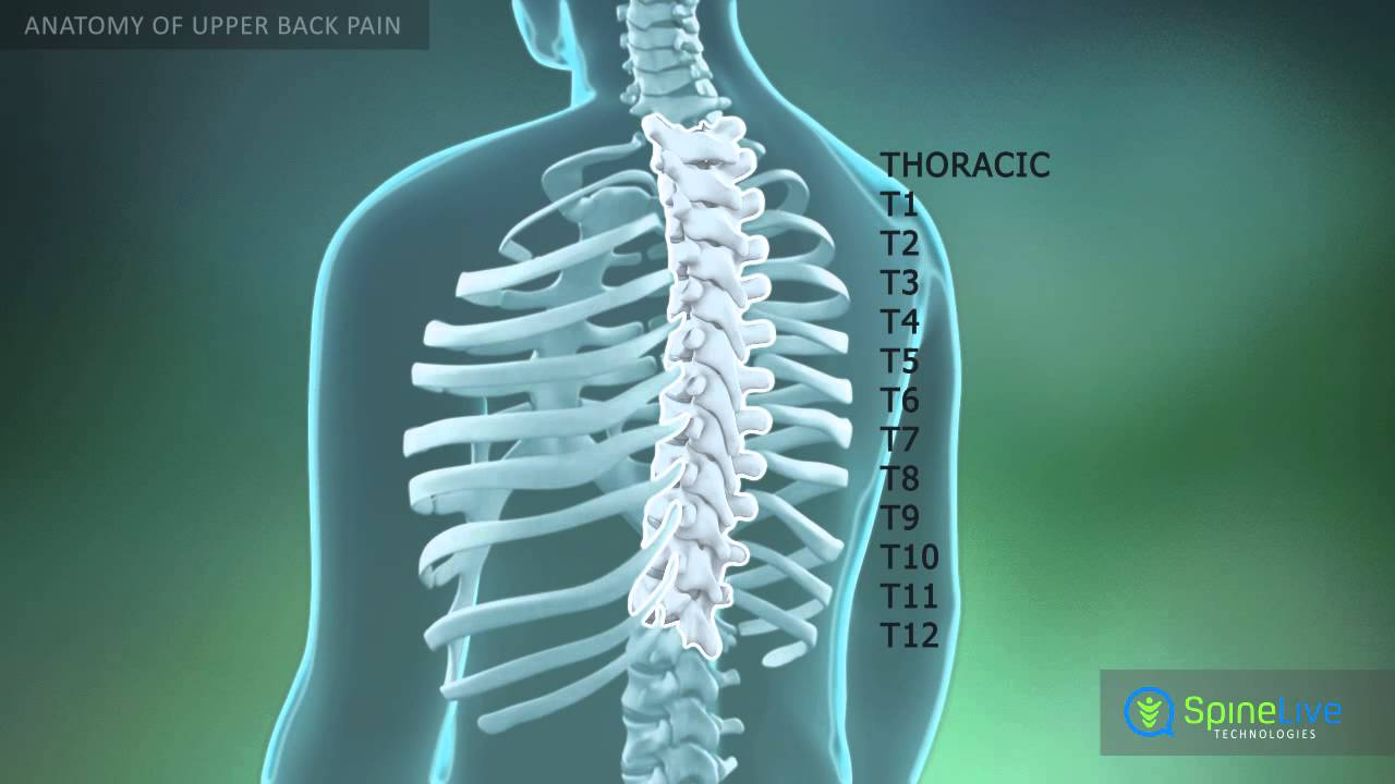 Upper Back Pain Anatomy - YouTube