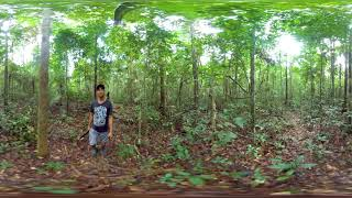 360º Video doTERRA Copaiba Essential Oil Sourcing
