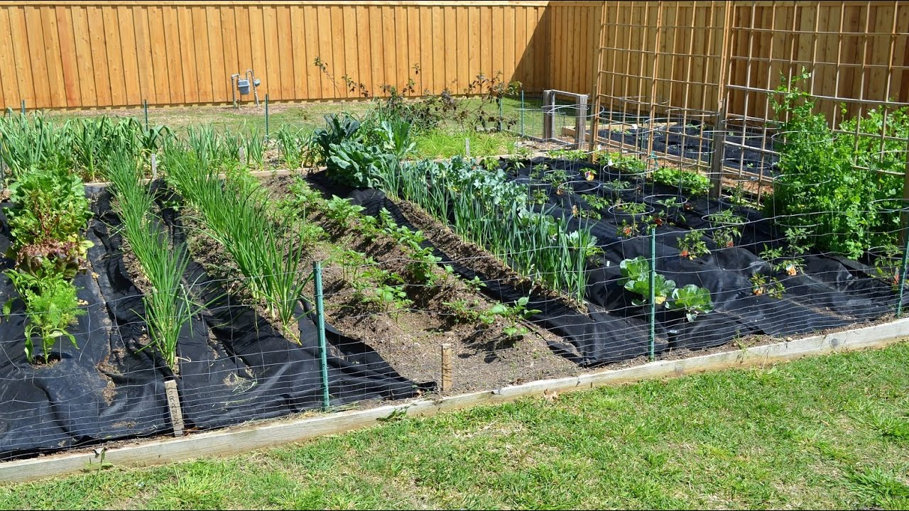 spring vegetable gardening in april with crazy texas weather - How To Start A Vegetable Garden From Scratch