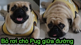 Thử bỏ rơi chó Pug giữa đường xem chó Pug phản ứng NTN ⏩ Pugk Vlog