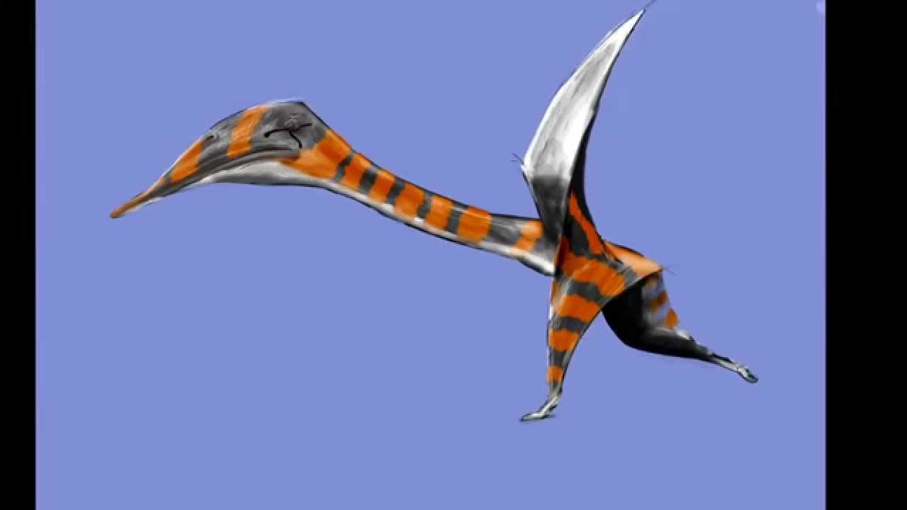 Drawing a Quetzalcoatlus Northropi in July, 2014 - YouTube
