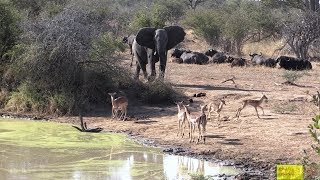 Drama At A Waterhole In Kruger Park