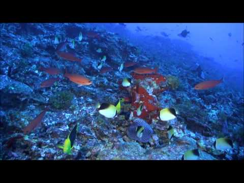 PLoS ONE : Fish Biodiversity of the Vitória-Trindade Seamount Chain, Southwestern Atlantic...