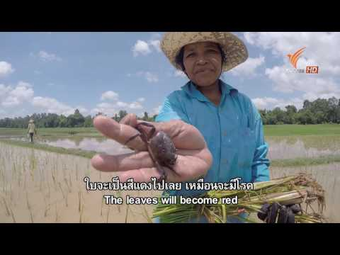 Spirit of Asia :  The First Rain in Cambodia