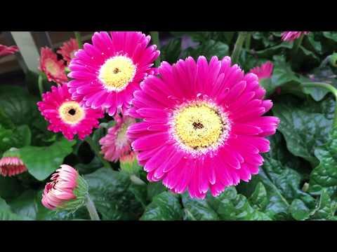 Леруа Мерлен рассада цветы#LeroyMerlin