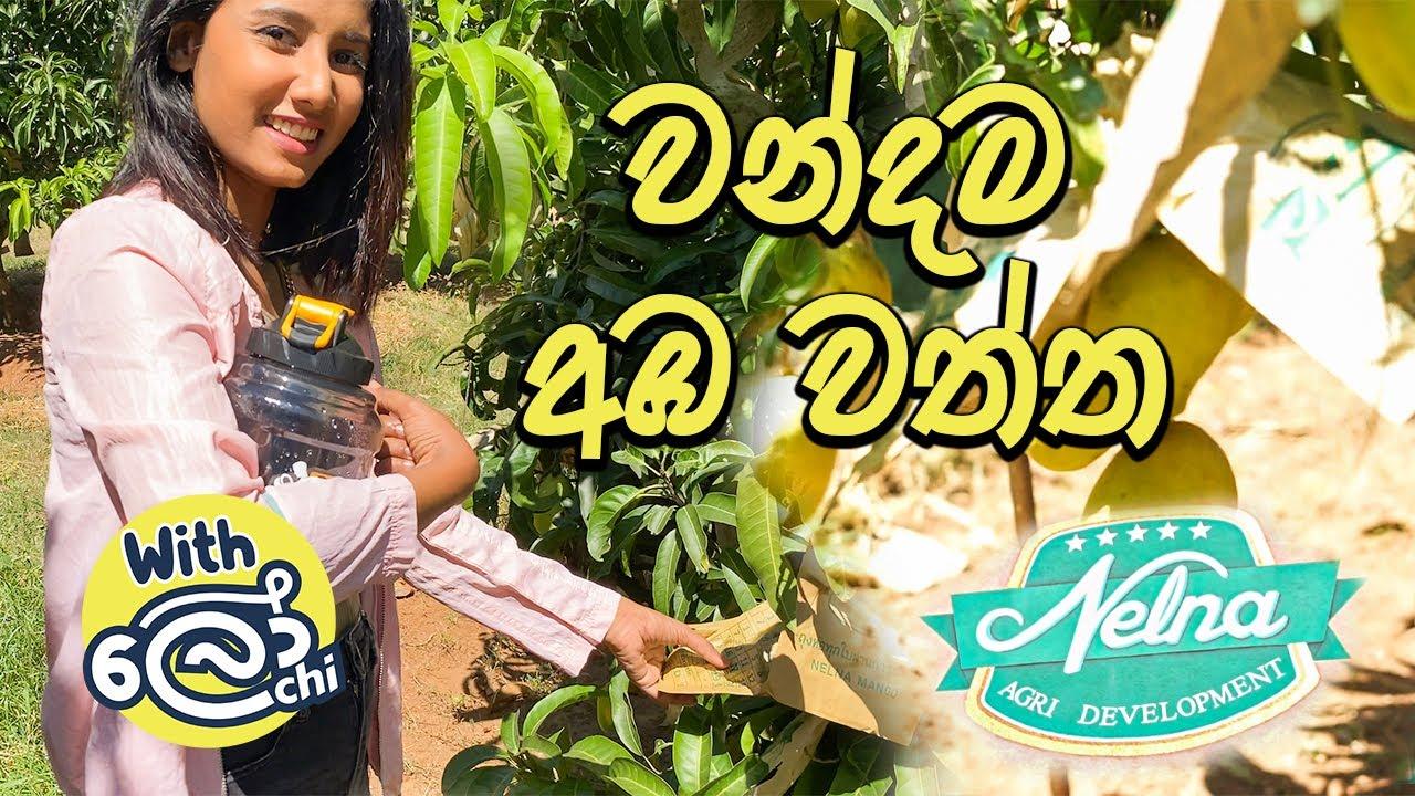 වන්දම අඹ වත්තට ගිය ගමන - Mango Farm (Vlog 01)
