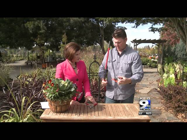 In the Garden: Caring for your gardening tools