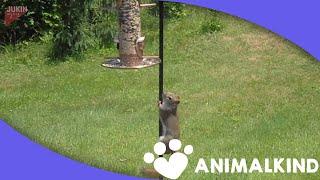 Dramatic play-by-play of a squirrel on a birdfeeder