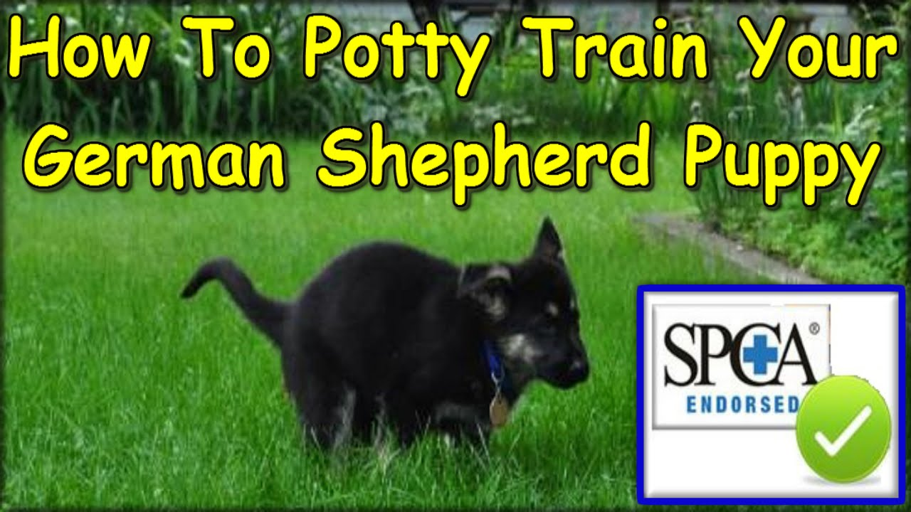 How To Train My Dog To Potty Outside