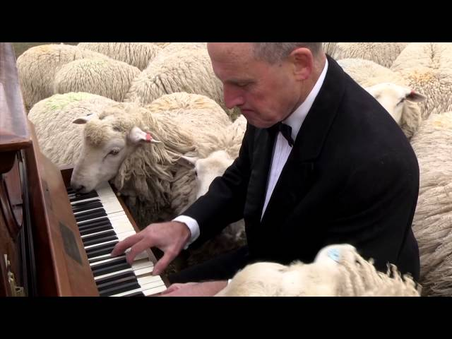 Concert for the sheep