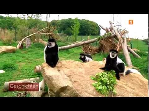 Zoo Geschichten