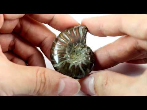 ファイヤーアンモナイト 化石 22g / Ammonoidea