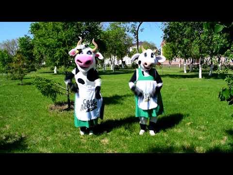 Наши коровы в теме!