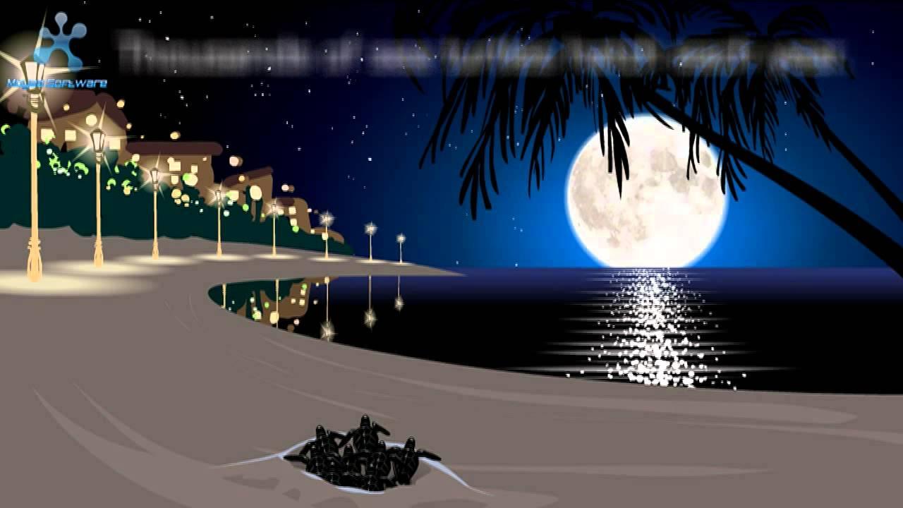 Darker Beaches Brighter Futures for Sea Turtles & Darker Beaches Brighter Futures for Sea Turtles - YouTube