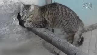 Смешные Коты и Кошки 2017 Приколы с Котами и Кошками 2017 Лучшие Приколы с Котам