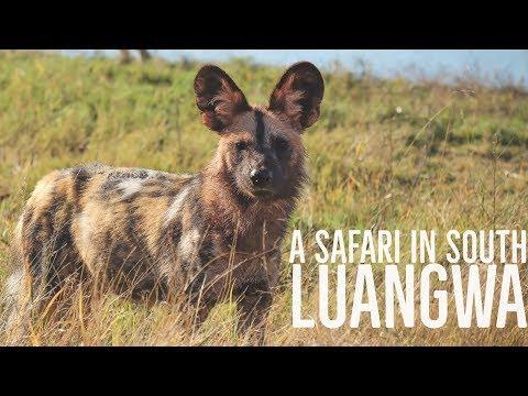 Zambia's South Luangwa National Park