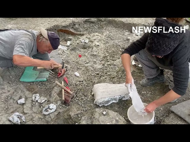 210 Million Year Old Swiss Dinos Head To Germany