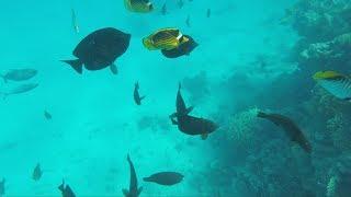 Hurghada 2018 - Snorkeling trip to Orange Bay