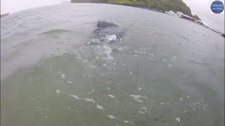 Lặn Biển bắt hải sản bất ngờ phát hiện con sứa thúng/catch seafood
