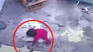 Cats Saves Toddler And Other Amazing Escapes
