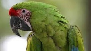 Talking parrot / what the fuck
