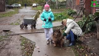 """Приют """"Кот и пёс"""" (Ижевск)"""