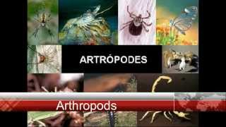 Arthropods: Insects, Myriapods, Arachnids, and Crustaceans