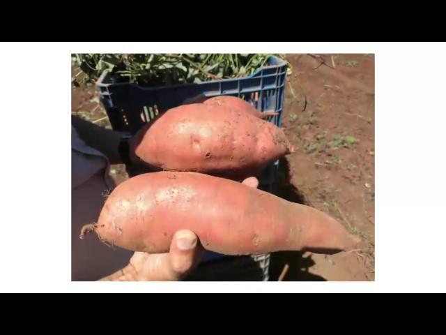 Fondos 2KR: Generando oportunidades a productores en Comayagua