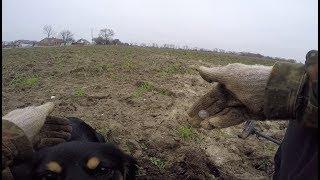 Отличный коп на поле с собакой. Монеты радуют разнообразием.