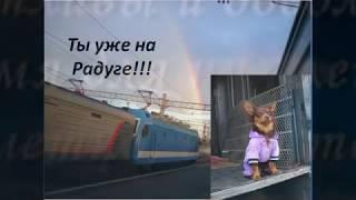 Памяти нашей любимой собаки !