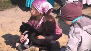 """Девочка нашла кота. Папа """"попал""""..."""