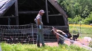 Kingbird Farm - Layer Management & Egg Production (2 of 2).mov