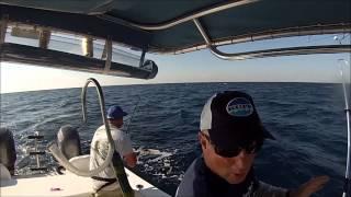 Mahi Fishing Stuart Florida 10/31/2014