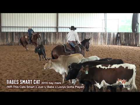 Babes Smart Cat (WR This Cats Smart x Just U Babe x Lizzys Gotta Player)